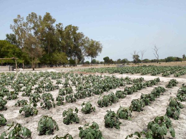 <span>Huerto, planta de ocra</span><i>→</i>